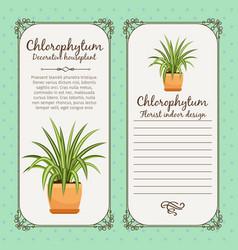Vintage label with chlorophytum plant vector