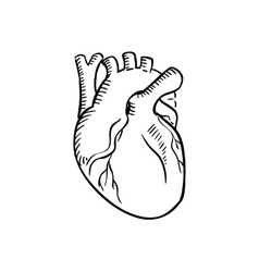 Isolated human heart outline sketch vector
