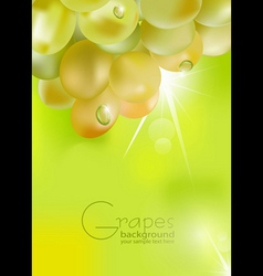 Fresh grapes vector