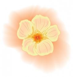 flower nasturtium vector image
