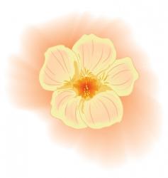 Flower nasturtium vector
