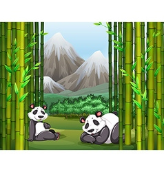 Pandas and bamboo forest vector