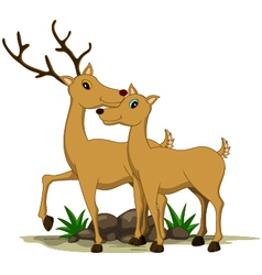 cute couple deer cartoon vector image vector image