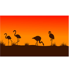 Flamingo scenery at sunset silhouettes vector