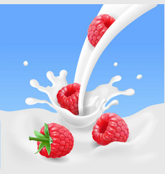 red raspberry fruits and milk splash 3d vector image
