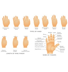 Names of the Fingers vector image vector image