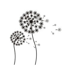 silhouette flying blow dandelion buds vector image