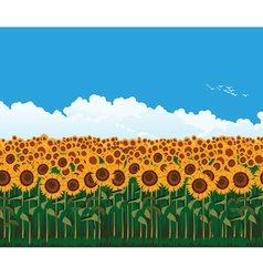 Picturesque field of sunflowers vector
