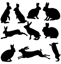 Rabbit silhouettes on the white background vector