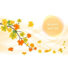 Autumn leaves in the wind vector