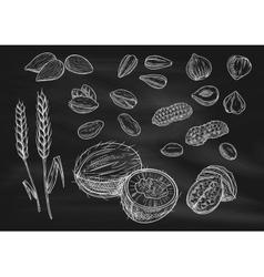 Nuts grain chalk sketch icons on blackboard vector