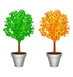 Tree in a pot vector image