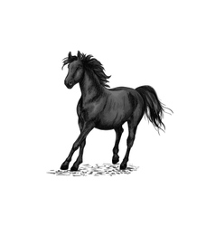 Black horse racing in gallop vector