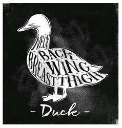 Duck cutting scheme chalk vector