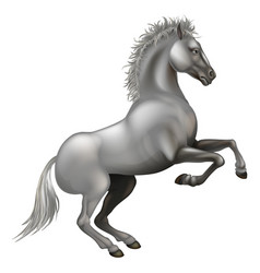 rearing white horse vector image