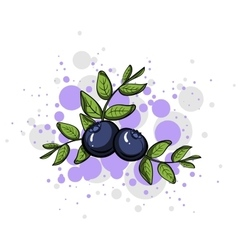 Blueberrystyle vector