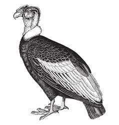 Condor vintage vector