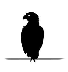 Silhouette of eagle black vector