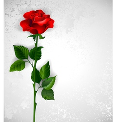 Straight red rose vector