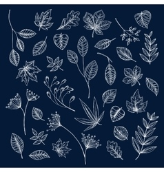 Branches of trees and herbs with leaves vector image
