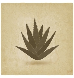 Aloe vera old background vector