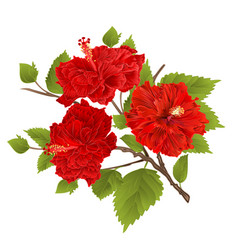 Branch red hibiscus tropical flowers on a white vector