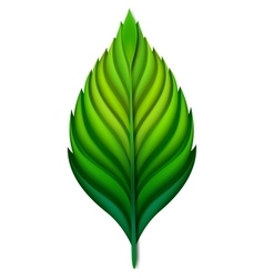 leaf isolated Green EPS10 vector image
