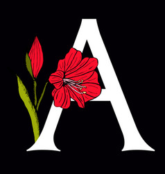 letter a with amaryllis flower vector image