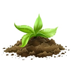 plant with green leaves vector image