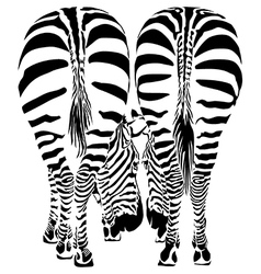 Two zebras eating - image vector