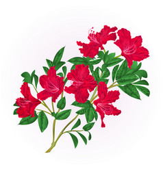 red rhododendron twig with flowers and leaves vector image