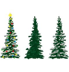 Three spruce trees vector