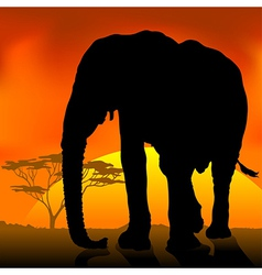 Elephant silhouette sunset vector