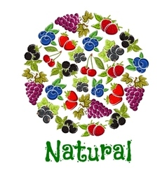 Natural fruits and berries in a shape of circle vector image
