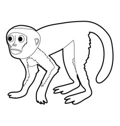capuchin icon outline vector image vector image