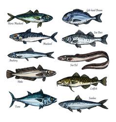 Fish seafood sketch set with sea ocean animal vector