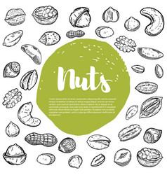 Cashew hazelnut walnut pistachio pecan nuts nuts vector