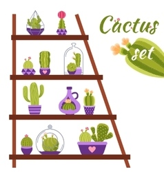 Cactus shelf vector