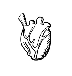 Human heart in sketch style vector