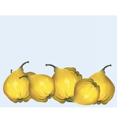 Yellow fresh quinces vector image