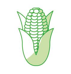 corn fresh vegetable icon vector image vector image