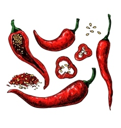 Chili pepper hand drawn vector