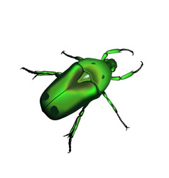 beetle a silhouette in vector vector image