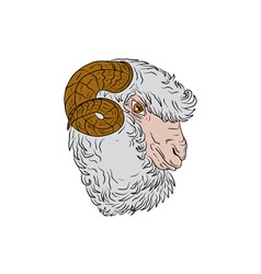 Merino ram sheep head drawing vector