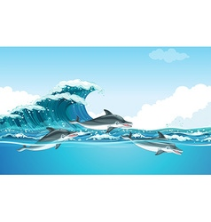 Dolphins swimming under the ocean vector image