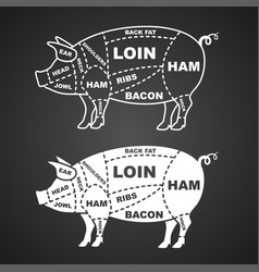 pork cuts diagram isolated on black vector image