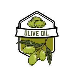 extra virgin olive oil olive branch design vector image vector image