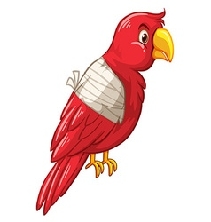 Parrot bird is injured vector image vector image