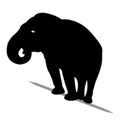 Silhouette of elephant black vector