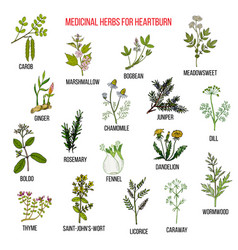 best herbal remedies for heartburn vector image